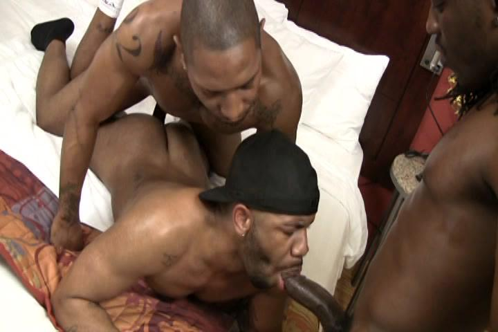 What Asses Are Made Of 2: Thorobreds Xvideo gay